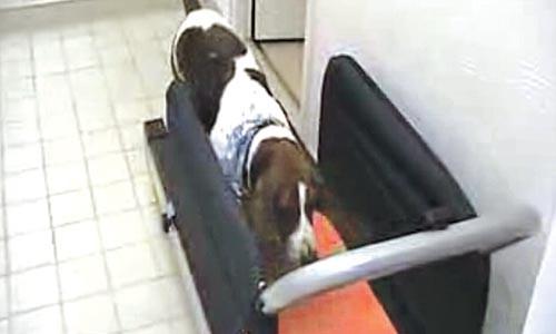 J.R. Block's dog on treadmill