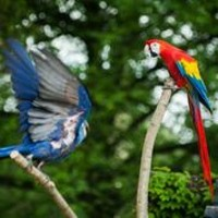 Outdoor free-flight shows return to the Aviary on Saturday