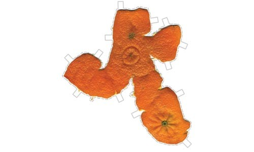 "Peel pressure: Delanie Jenkins' ""Make your own Clementine Sculpture!"""