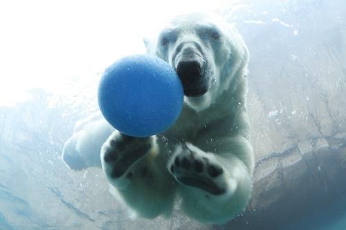 Play ball! Koda enjoys time in his pool. - PHOTO BY HEATHER MULL