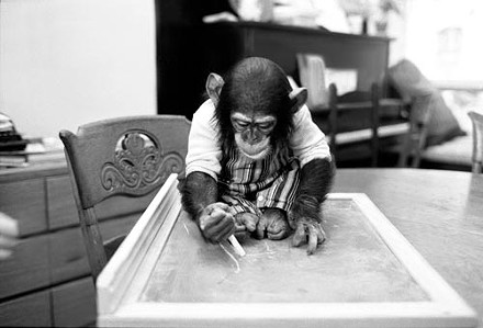 Portrait of the artist as a young chimp: Nim, at home in New York City