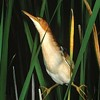 Rare wetlands birds populate the photo show <i>Marshes: The Disappearing Edens</i>.