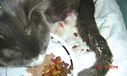 Rutu prior to his removal from Tiger Ranch in October 2007. - COURTESY OF DIANE GOLDBLOOM