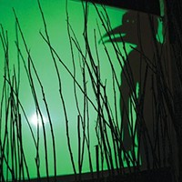 "Shadowplay in ""Birds of America"""
