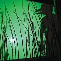 """Shadowplay in """"Birds of America"""""""
