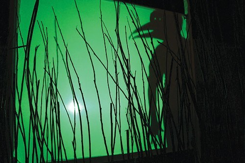 Shadowplay in Birds of America
