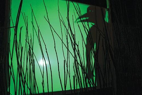 Shadowplay in Birds of America