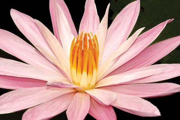 sl_phipps_flower_05.jpg