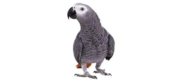 sl_parroting_45.jpg