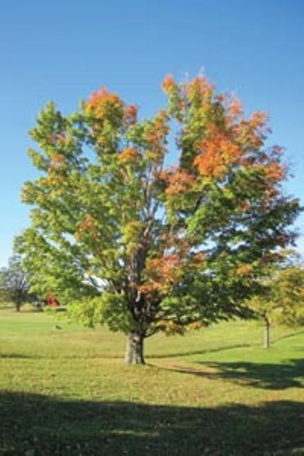 01_sl_trees.jpg