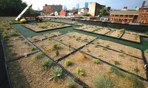 The rooftop garden of CCI's South Side building - HEATHER MULL