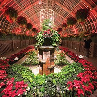 Phipps Conservatory's annual winter flower and light show