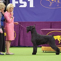 <i>Docuseries</i> 7 Days Out explores dog shows, NASA missions, and other major events