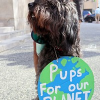 Boomba Nishikawa, a student at the University of Pittsburgh, brought his dog Fiji to the Climate-Strike.