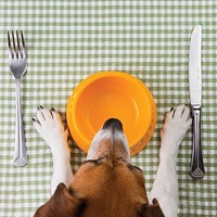 Pet store owner a champion for good pet nutrition