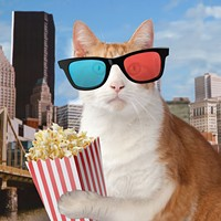 Felines are the stars of the touring Internet Cat Video Festival
