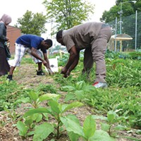 Abdulkadir Chirambo (center) and other members of Pittsburgh's Somali Bantu community weeding the community garden in Northview Heights