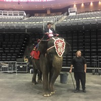 Animal rights group PETA calls out Pittsburgh City Councilor Harris for elephant ride