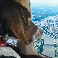 Pittsburgh aviation team rescues animals along the East Coast