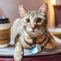 The Colony Café, in the Strip District, lets patrons enjoy coffee, wine, light fare and snuggling with cats