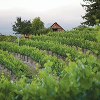 A Pittsburgh-native winemaker makes good in California