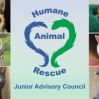 Become a member of the Junior Advisory Council