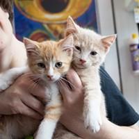 Kittens invade Butler Street for Lawrenceville Cat Crawl