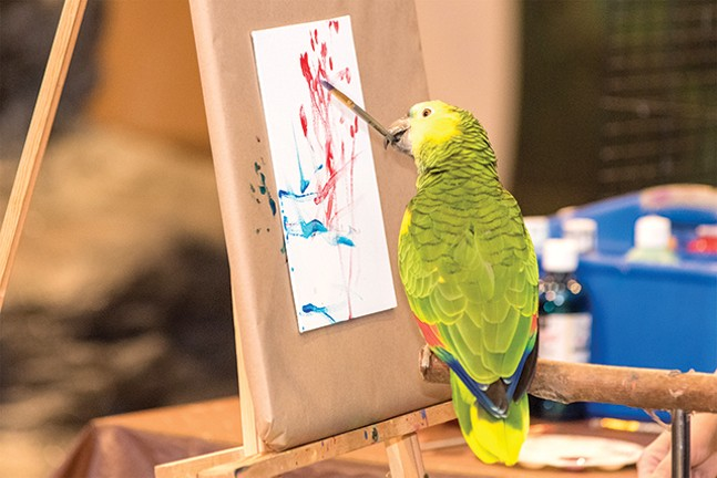 Parrot painting at the National Aviary - PHOTO: JAMIE GREENE
