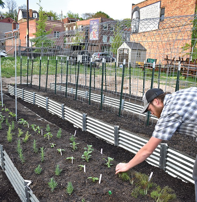 Jonathan Corey tends Spork's garden, which produces crops and garnishes that end up on the restaurant's menu.