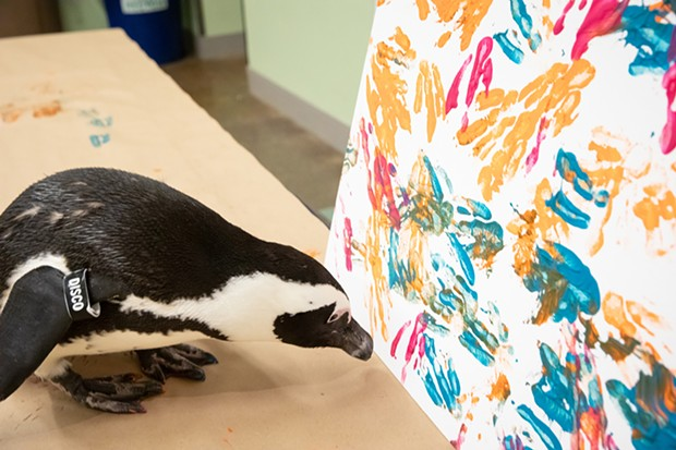 The National Aviary's Disco the penguin, this week's cover artist - CP PHOTO: RENEE ROSENSTEEL