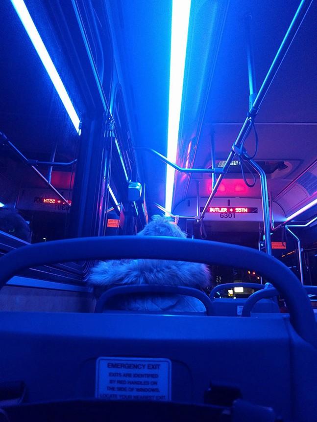 (More than) kind of blue inside a 91 bus - CP PHOTO: ABBIE ADAMS