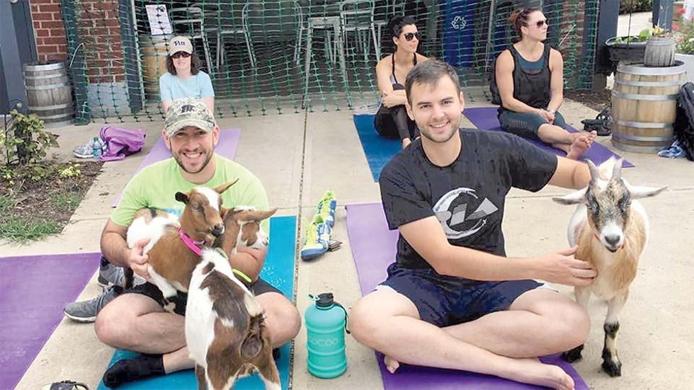 Goat yoga - HAVE U HERD