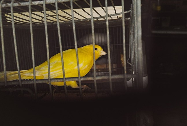13-animalissue-canary-coalmine.jpg