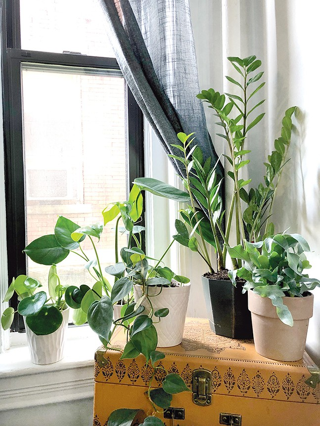 A few of Jordan Snowden's indoor plants. - CP PHOTO: JORDAN SNOWDEN