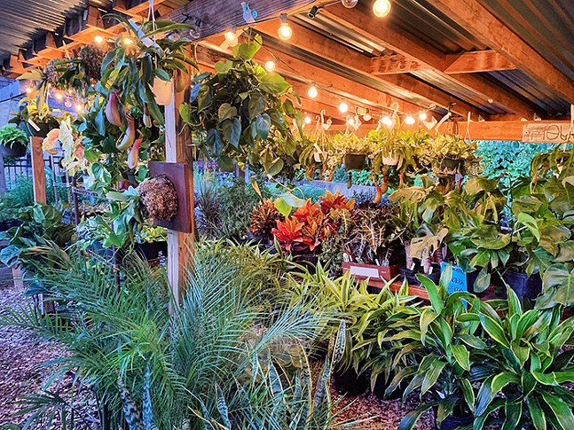 Plants available at Shadyside Nursery - PHOTO: NATASHA BRITTAINCAPTION