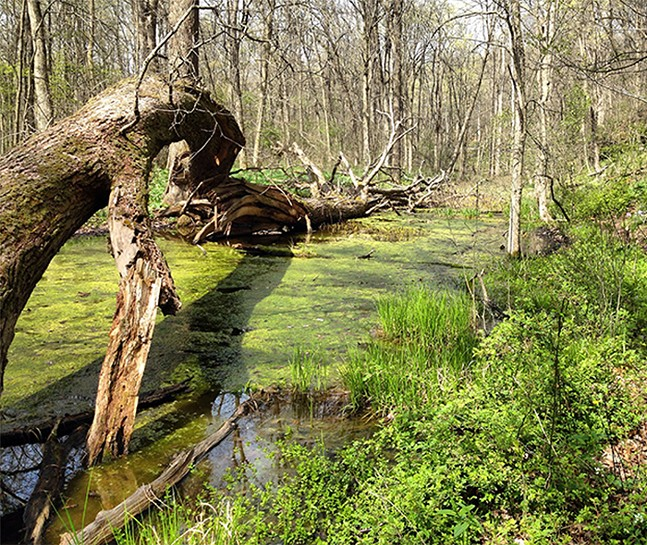 The vernal pool at Raccoon Creek State Park - CP PHOTO: RYAN DETO