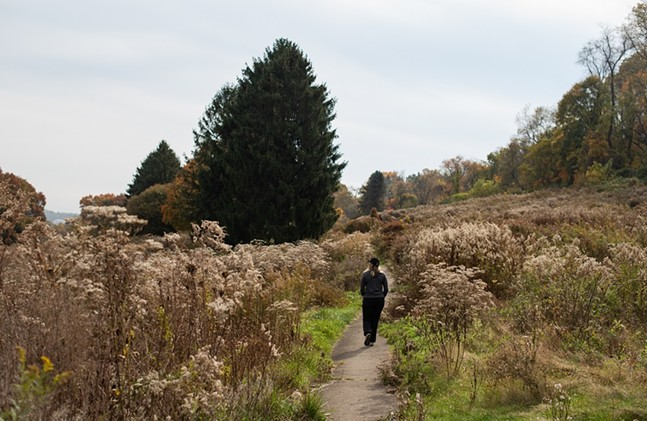 A person walks a trail through the former Churchill Valley Country Club - PHOTO: LINDSAY DILL