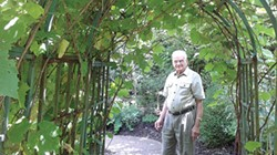 Rabbi Walter Jacob walks under an arbor of grapevines in the Biblical Botanical Garden at Rodef Shalom. - PHOTO BY ASHLEY MURRAY