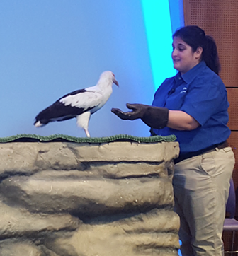 The Aviary's Cathy Schlott with Severus, a palm-nut vulture, at a press preview of Nature's Voice. - PHOTO BY COURTNEY LINDER