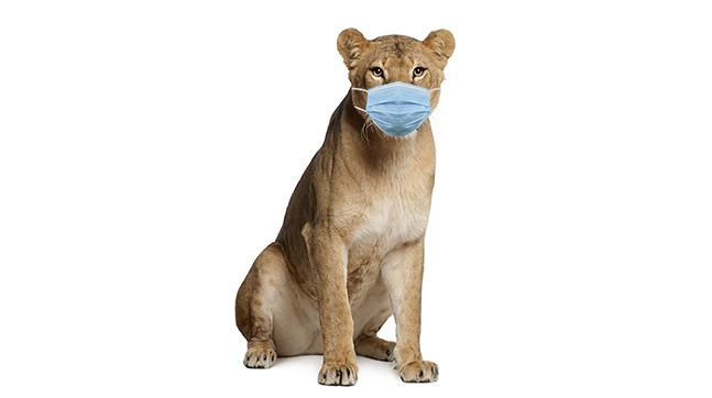 Cuteness aside, the CDC advises that you not put face masks on animals