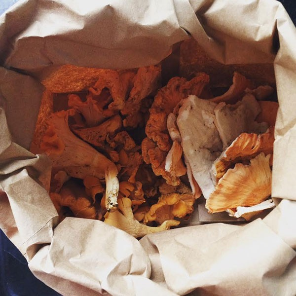 Chanterelles in bag: Wild foraged chanterelles and hen of the woods mushrooms. - CHANTERELLES