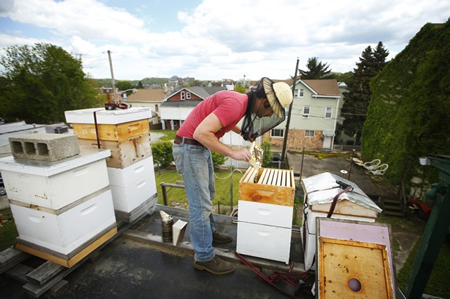 Ben Muti tends to his beehives atop his Troy Hill home. - CP PHOTO: JARED WICKERHAM