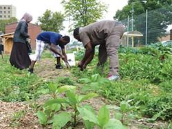 Abdulkadir Chirambo (center) and other members of Pittsburgh's Somali Bantu community weeding the community garden in Northview Heights - CP PHOTO BY RYAN DETO