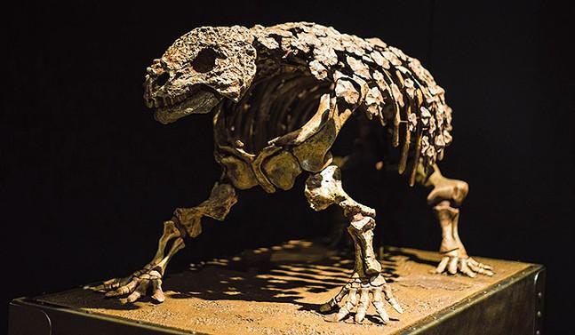 Dinosaur Armor at Carnegie Museum of Natural History - PHOTO: EDDIE PHILLIPPS