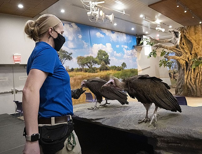Hooded vultures at the National Aviary - PHOTO: MIKE FAIX