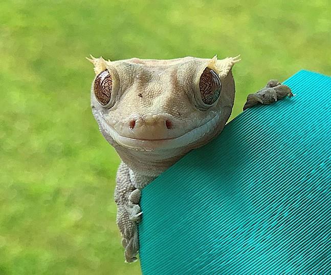 harold-staffpick-cutestpetcontest-pittsburgh-cutepets.jpg