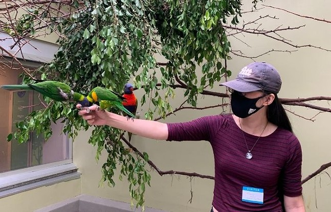 Swiansons lorikeet looks at Pittsburgh City Paper staff writer Kimberly Rooney during the Lorikeet Feeding. - CP PHOTO: KIMBERLY ROONEY