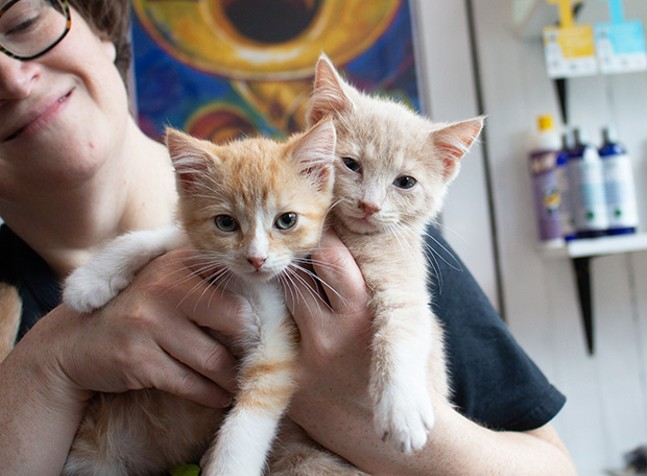 An Animal Friends volunteer holds up two kittens during the Lawrenceville Cat Crawl on Sat., May 19 - CP PHOTOS BY ANNIE BREWER