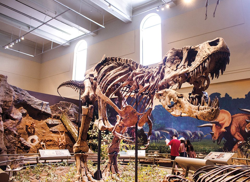 Carnegie Museum of Natural History - CP PHOTO BY ANNIE BREWER
