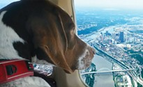 Pittsburgh aviation teams rescues animals along the East Coast